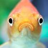 katbeee's avatar