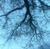katcat314's avatar