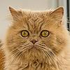katkgb's avatar