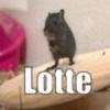 Katzelotte's avatar