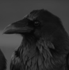 KazedSkies's avatar