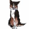 Kazwolfy's avatar