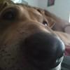 Kerstster1's avatar