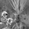 kfractal's avatar
