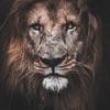 Kiana623's avatar