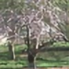 Kiddo0526's avatar