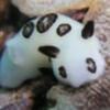 Kiisselikettu's avatar