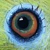 kijker1962's avatar