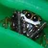 Kilsley's avatar