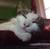 Kingkat061283's avatar