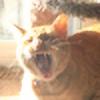 kiracat13's avatar