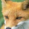 kitsunekayoubi's avatar