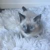 kitten0604's avatar