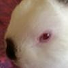 KittenRazzly's avatar