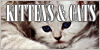 Kittens-and-Cats's avatar