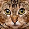 Kittenstar24's avatar
