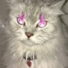 kitttiez's avatar