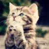 kittycat1297's avatar