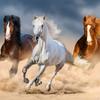 kittyhorse82's avatar