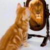kittykat88's avatar