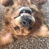 Kittypie323's avatar