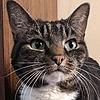 kittypizzadude's avatar