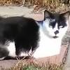 KittyShellZzz's avatar