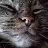 KittyStorage's avatar