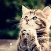 KittyWindy's avatar