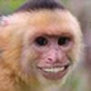 KJ-Horne's avatar