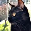 Klau--Lion-Heart's avatar