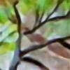 Kloradori7's avatar
