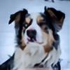 KodiakSunset's avatar