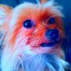 KofyBoki's avatar