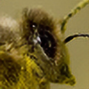 kolizija's avatar