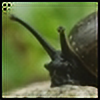 Komar4's avatar