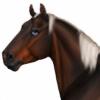konikfryzyjski's avatar