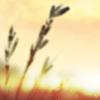 Koriaris's avatar