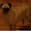 kotolian's avatar