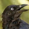 KouBird's avatar