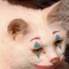 Kozyrek's avatar