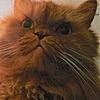 Kramerados's avatar