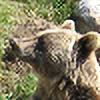 Kreivi's avatar