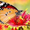 krishnenduash's avatar