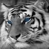 Kryokinesis's avatar