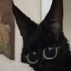 Kuda001's avatar