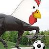 Kurri-Rooster's avatar