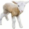 kutzu's avatar
