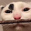 Kwiwo's avatar