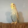 L0rdPlexein's avatar